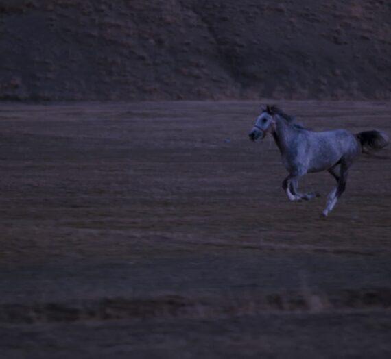 Sinemada Etik | Hayvan Kullanımı, Yılmaz Güney, Bernardo Bertolucci, Shutter | Ve Bazı Film Önerileri